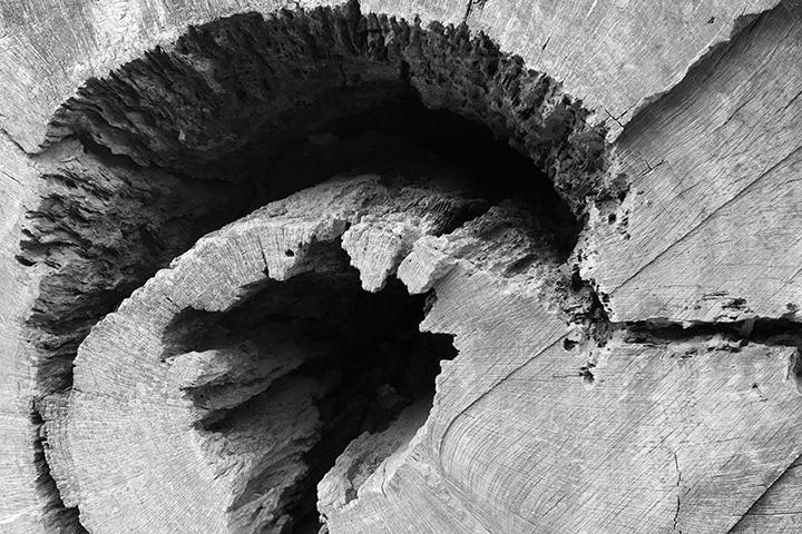 04 old oak