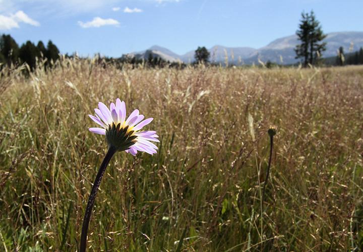 06North Meadow